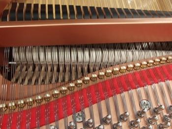 CIMG1635 (550x413).jpg